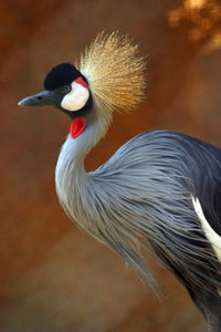 crown crane