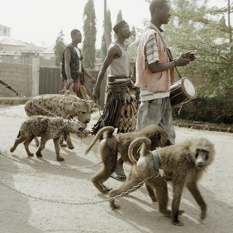 hyenasbabbons