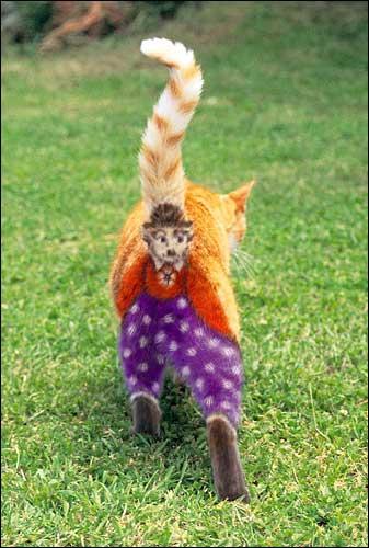 wroongcat