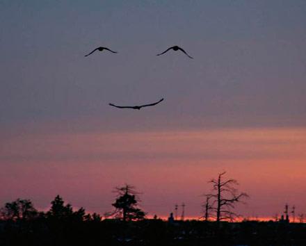 birdsmiley