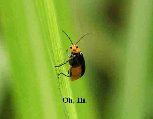 oh hi!