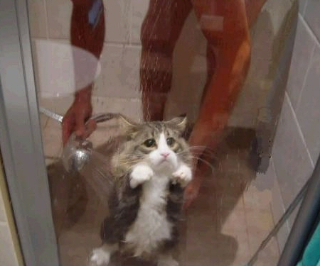 tortured kitty