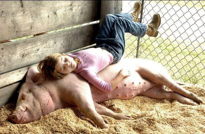 pig sleeper