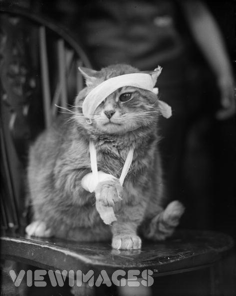 bandaged cat