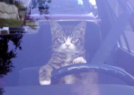cat driver