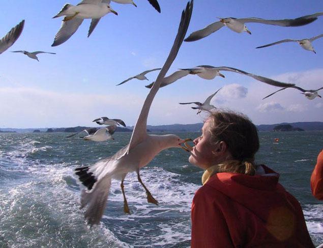gull kiss