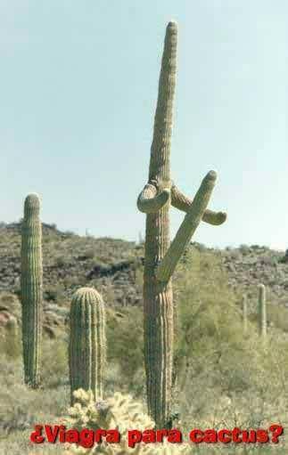 cactus crank
