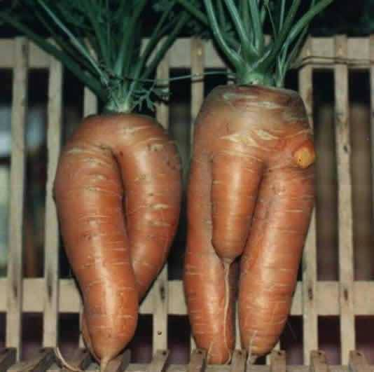 his n her carrots