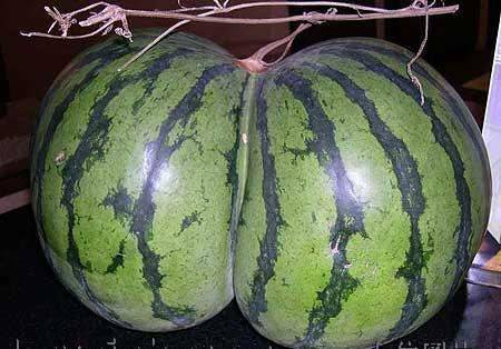 watermelon butt