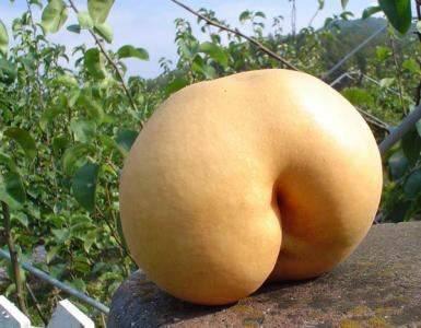 butt squash