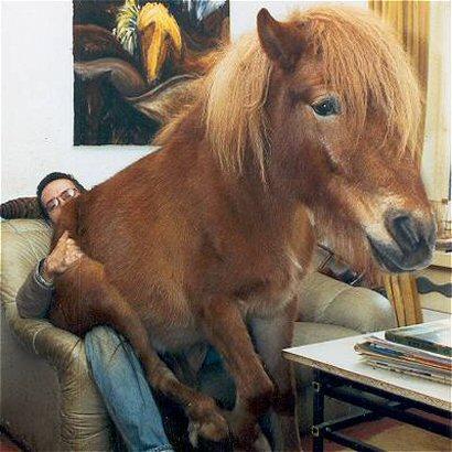 horse lapdance