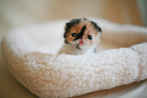 squash cat