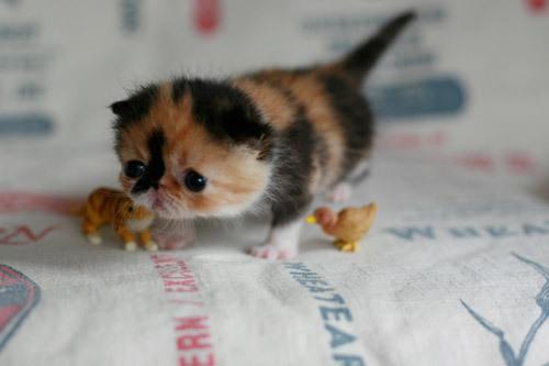 squash cat2