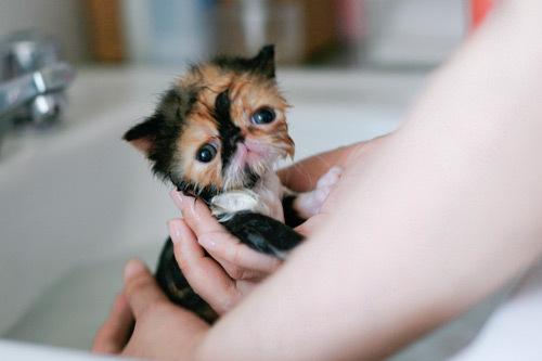 squash cat1