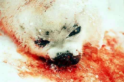 dead seal baby