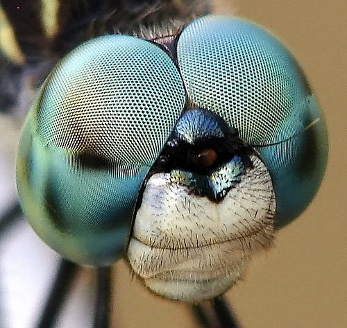 http://loscuatroojos.com/wp-content/uploads/2008/05/fly-eyes.jpg