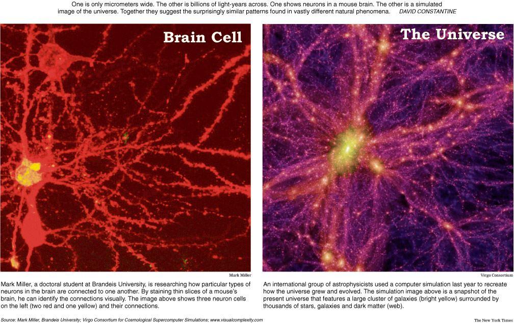 universe neuron