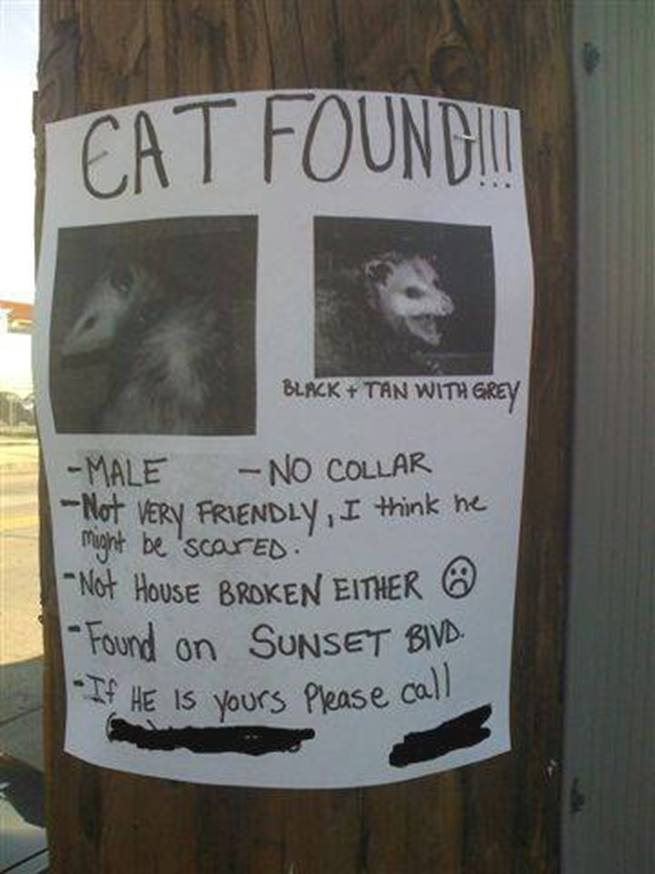 possum cat