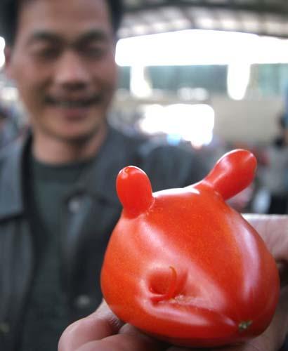 tomato cow