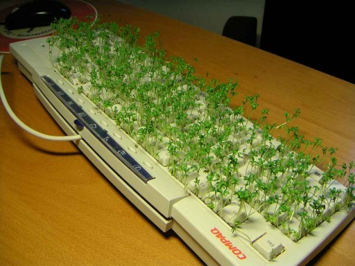 Chia pet keyboard1