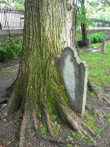 tree eats headstone
