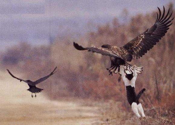 cat catch bird