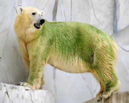 Green polar bear