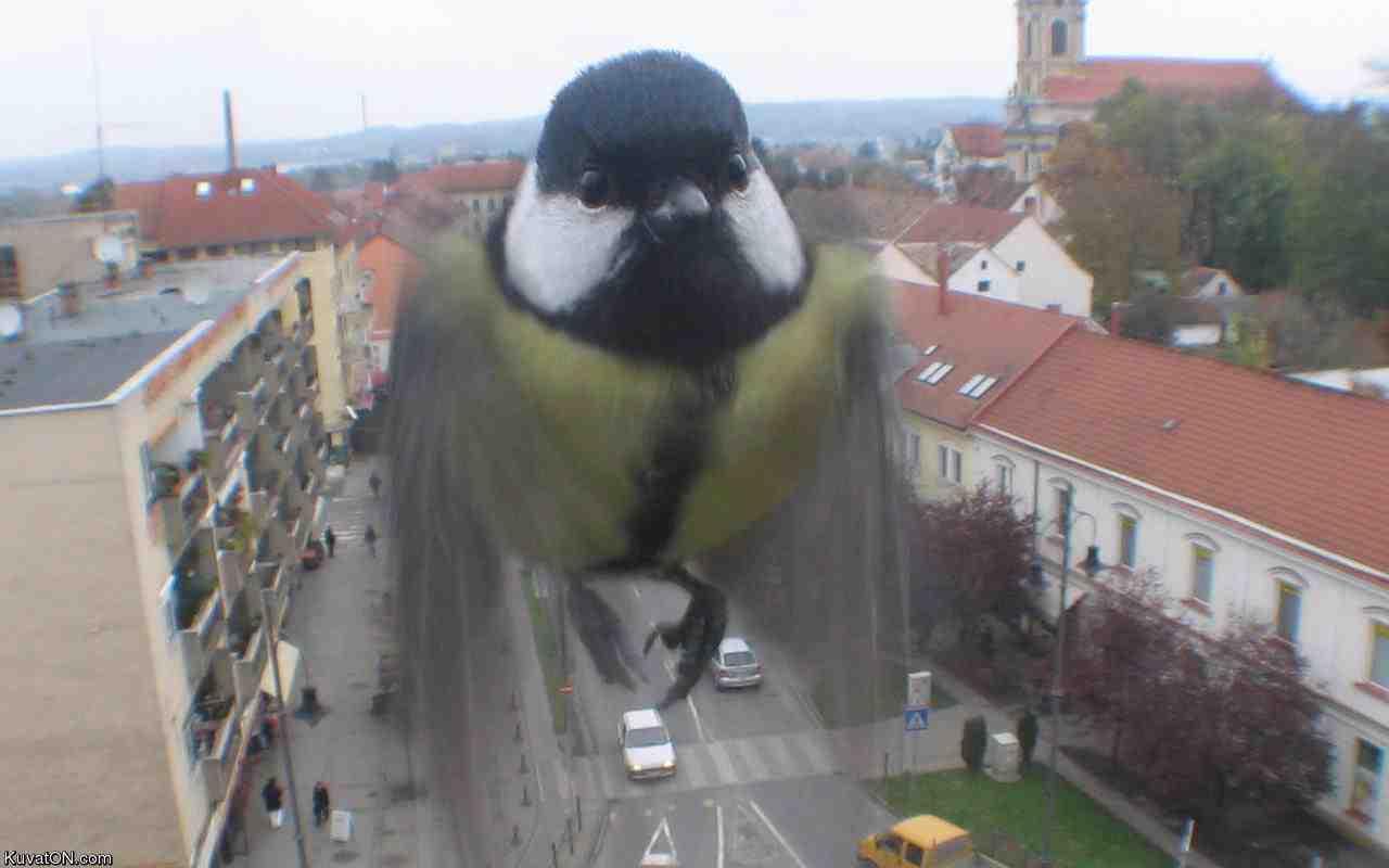 Bird spy