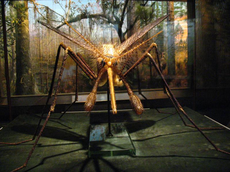 Giant mosquito3