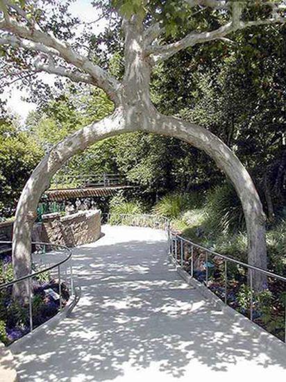 Tree form2