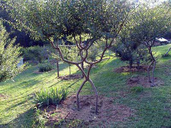 Tree form4