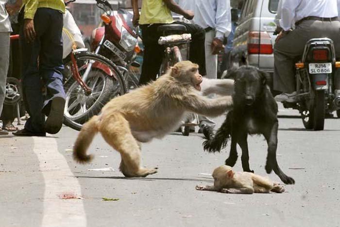 baby monkey rescue3