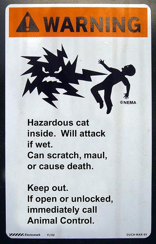cat hazard