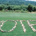 vote-hills
