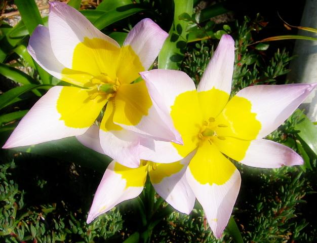 egg-flower