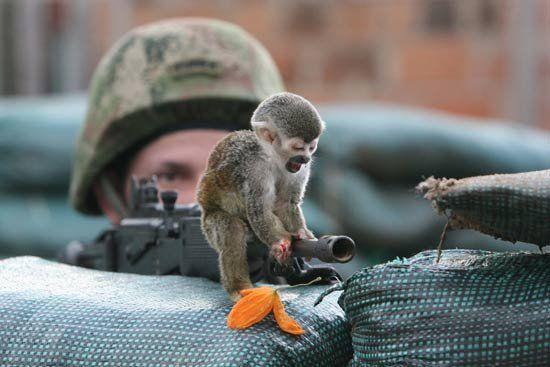 gun-monkey1