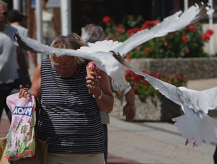 ice_cream_stealing_birds_5
