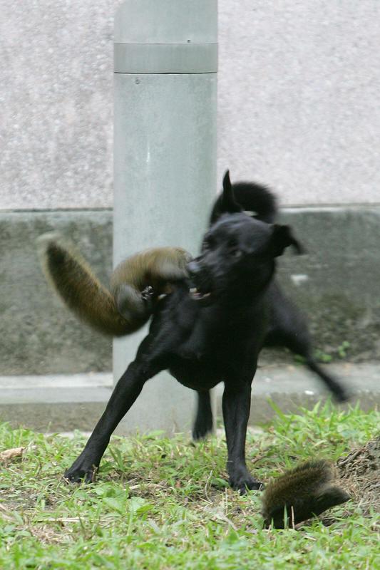 squirrel-rescue3