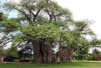 tree-bar