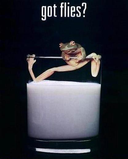 frog-in-milk