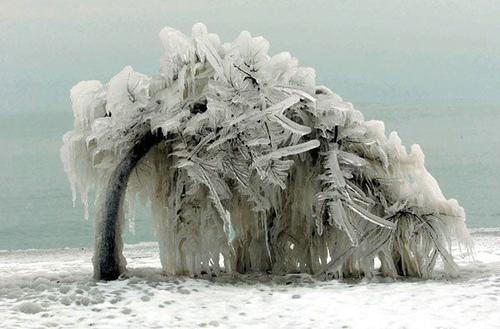 frozen-tree