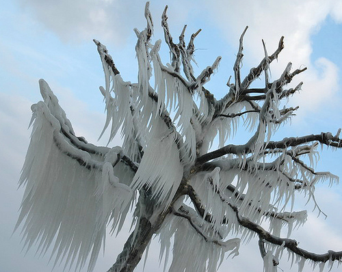 frozen-tree1