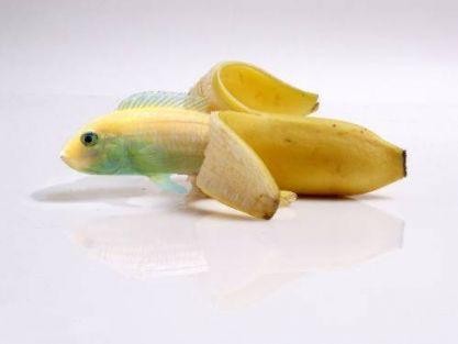 bananfish