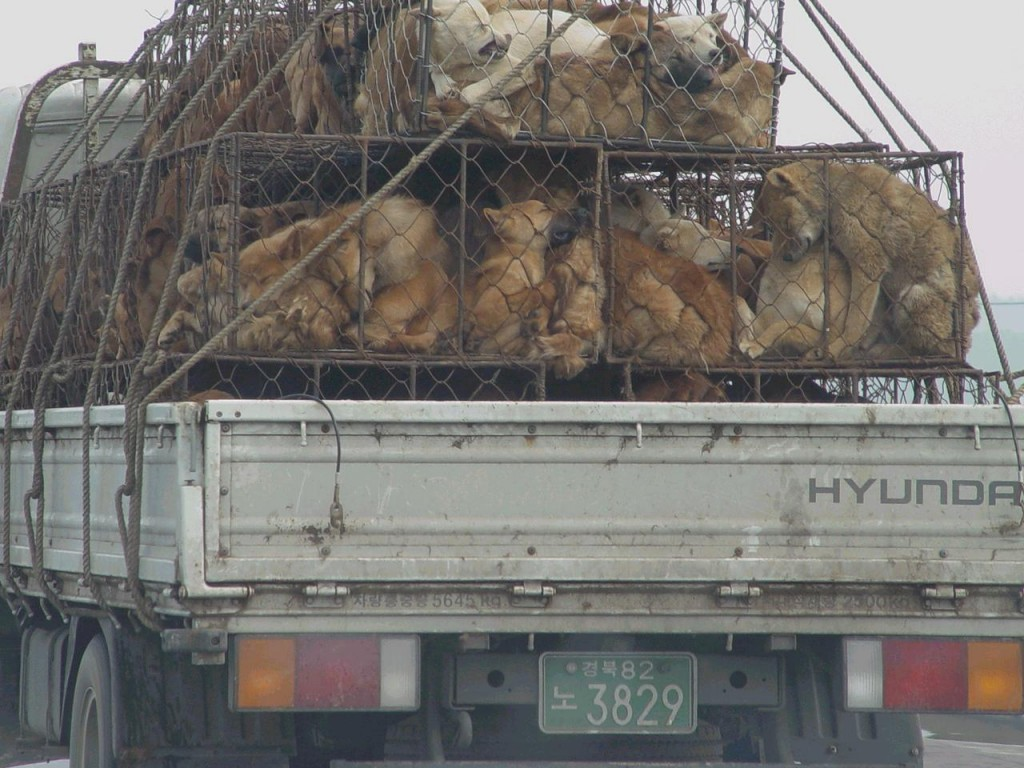 dogs-in-china