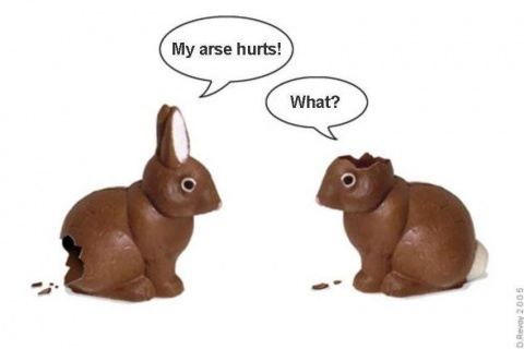 funny_easter_bunnies