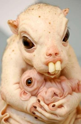 rat-mom