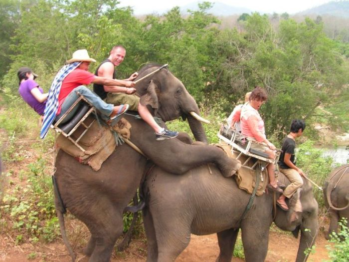 real-elephant-ride