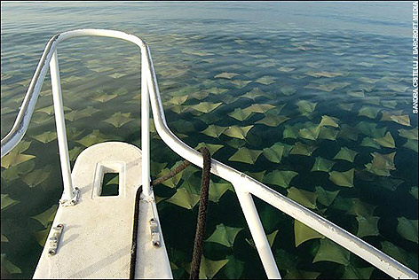 stingray_migration_1