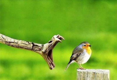 snake snaps bird