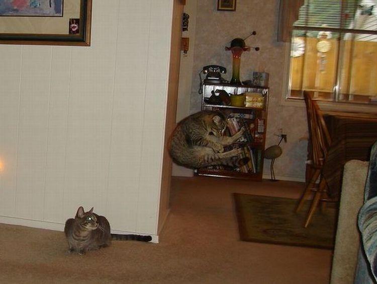 cat-crash
